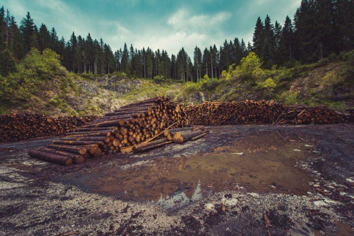 畜産のために山を切り崩す森林伐採