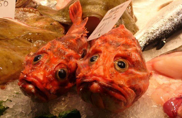可愛い顔の魚