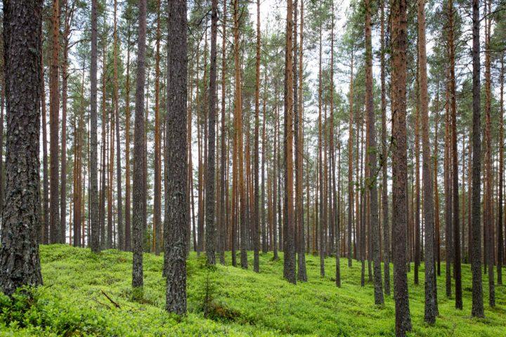 美しい緑の森林と自然