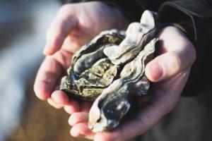 ペスカタリアンが食べても良い牡蠣や魚に痛覚はあるの?