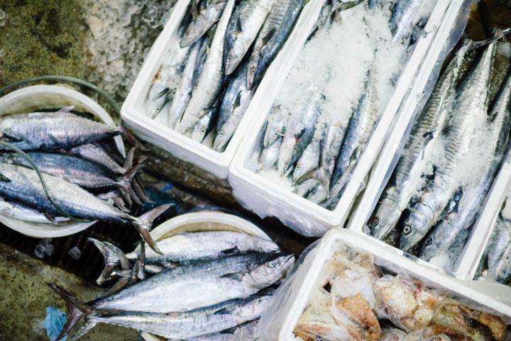 DHAとEPAの源となる魚たち