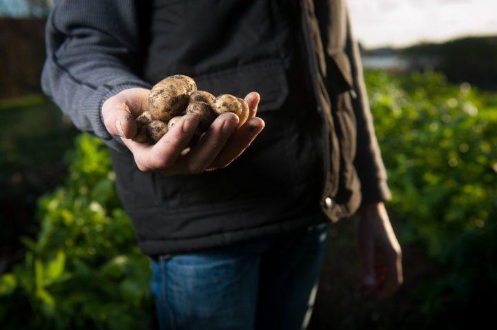 収穫したてのジャガイモを手にする有機栽培農家の人