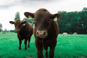 フレキシタリアンは動物愛護にも貢献する?