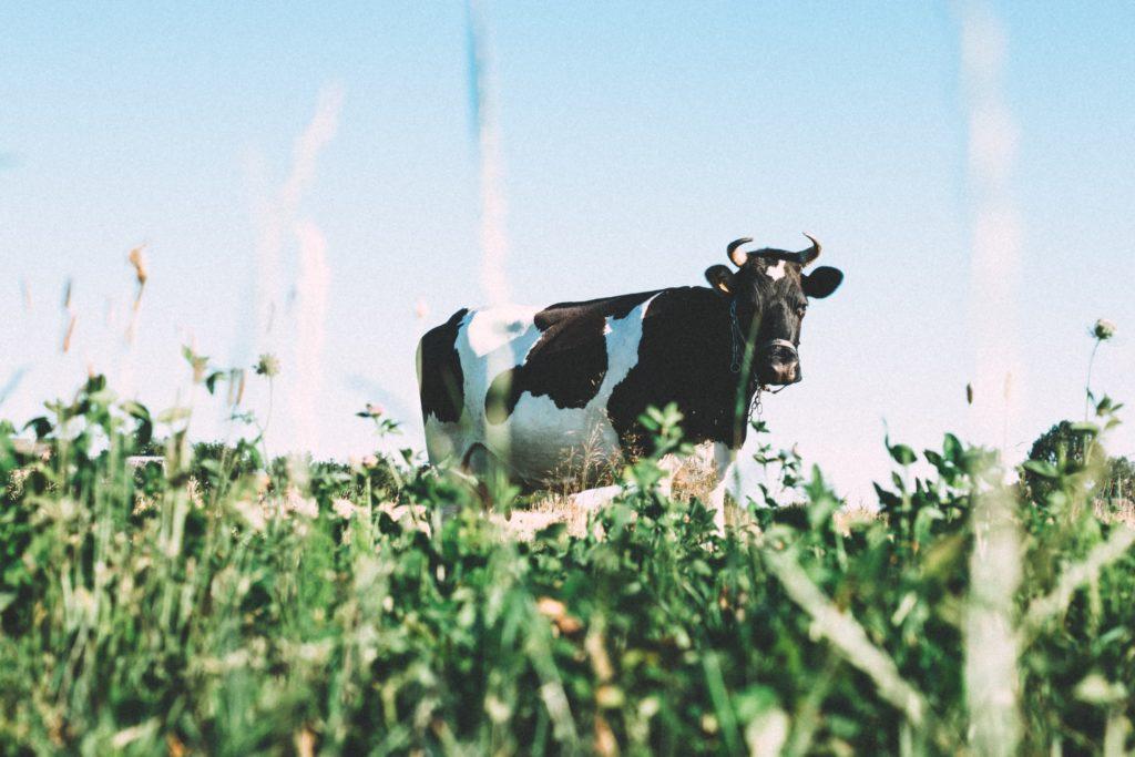 植物での代替が進む牛乳(ミルク)産業